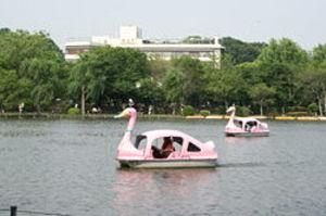 100321swanboat